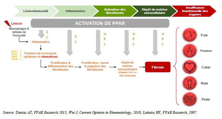activation parp