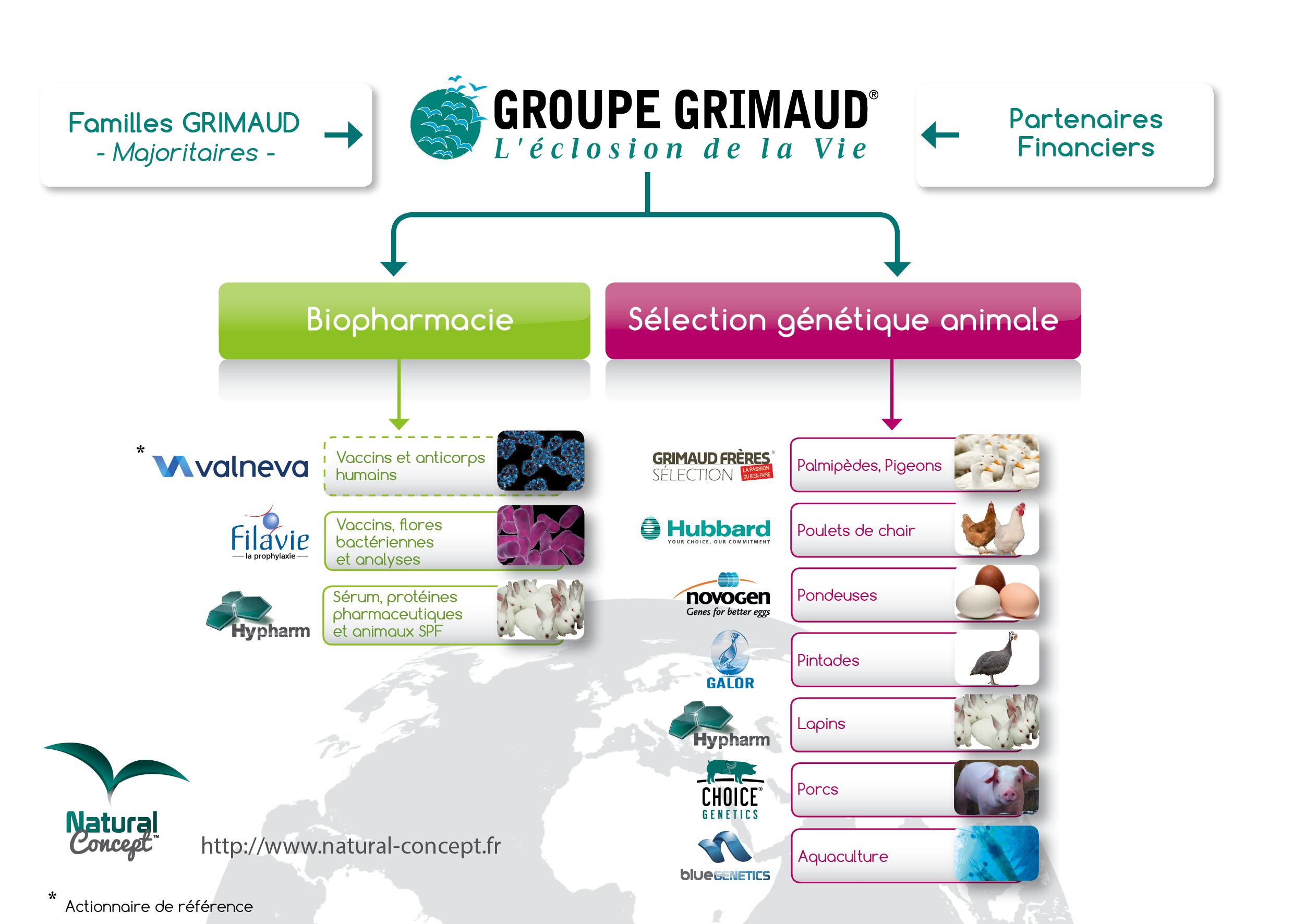 organigramme du Groupe Grimaud
